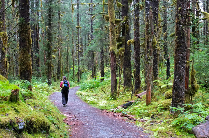8) Alaska's State Forest are great to spend time in all year round!