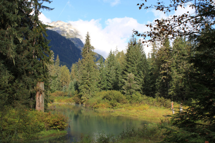 3) The largest national forest in the United States is the Tongass National Forest.