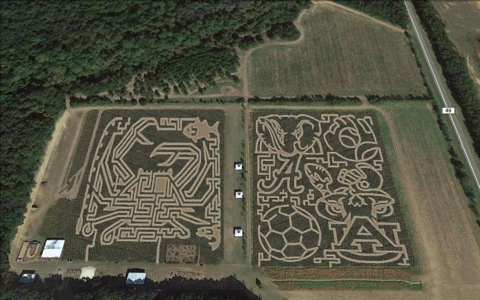 AL Corn Maze 1