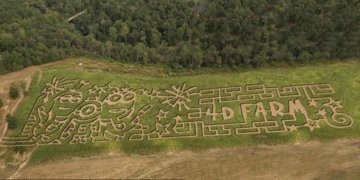 7. 4D Farm Corn Maze