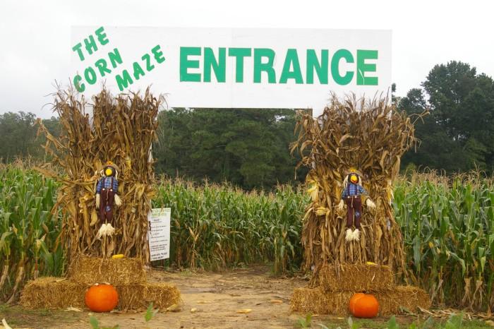 2. Sand Mountain Corn Maze