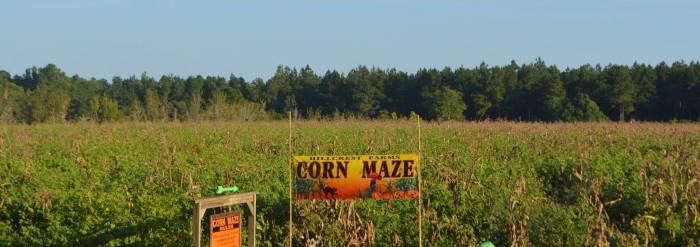 AL Corn Maze 6.1