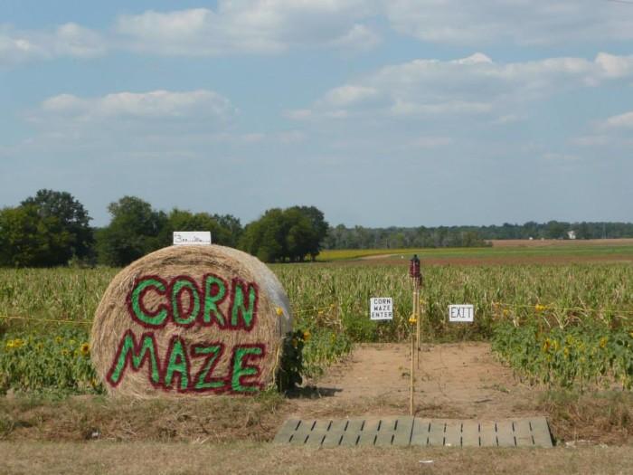 4. Aplin Farms Corn Maze