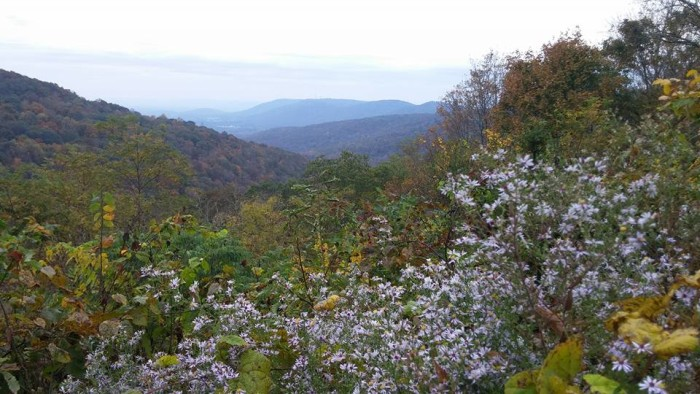 10. This beautiful photo was captured at Monte Sano State Park in Huntsville, Alabama.