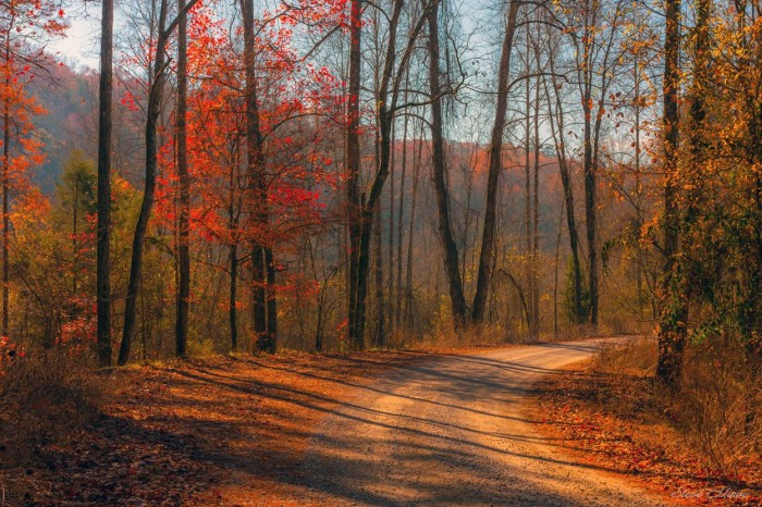 """7. This wonderful photo, titled """"Around The Bend,"""" was captured within the Bankhead National Forest."""
