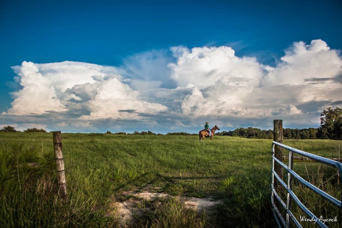 8. In this beautiful photo, Wendy Aycock's son, Will, is in the pasture behind their home in Albertville, Alabama.