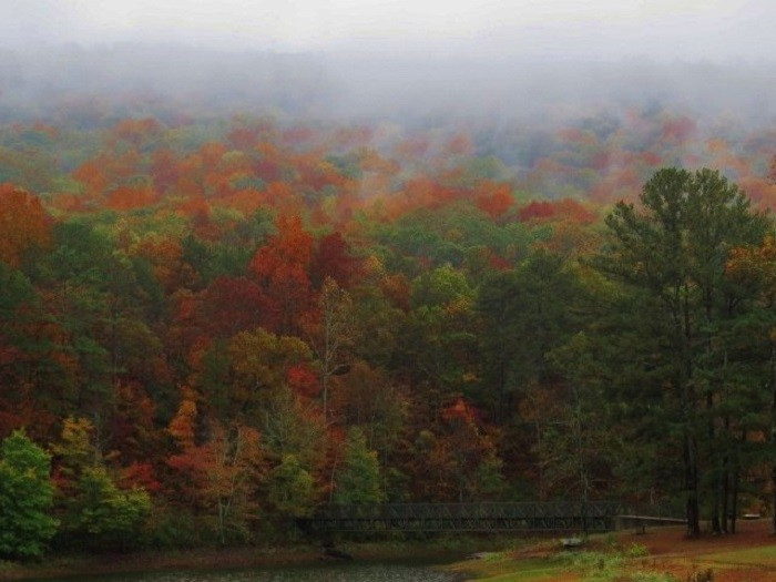 6. This photo was captured at Camp Sumatanga in Gallant, Alabama. The colors of the fall foliage are INCREDIBLE!