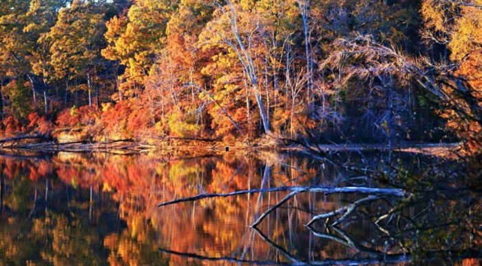 20. The Tennessee River is so beautiful this time of year. This photo was captured in Morgan County.