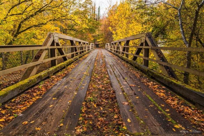 9. A FANTASTIC shot of the Sipsey River Bridge!