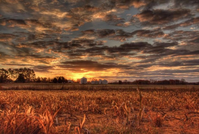 14. This AMAZING photo was captured during the early morning hours over a harvested field near Capshaw, Alabama.