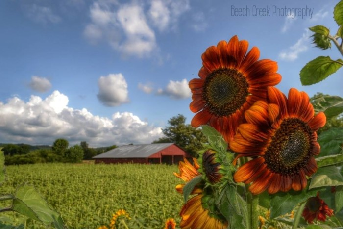 4. I love sunflowers and I LOVE this photo, which was captured on the Kist Farm near Lake Guntersville.