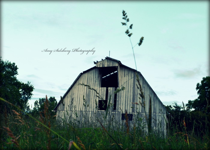 13. Amy Salsbury is a photographer in Terre Haute who emailed me a handful of gorgeous pictures she had taken!