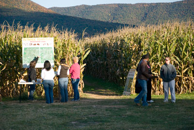 5. Maize Quest at Bridgemont Farm, Quicksburg