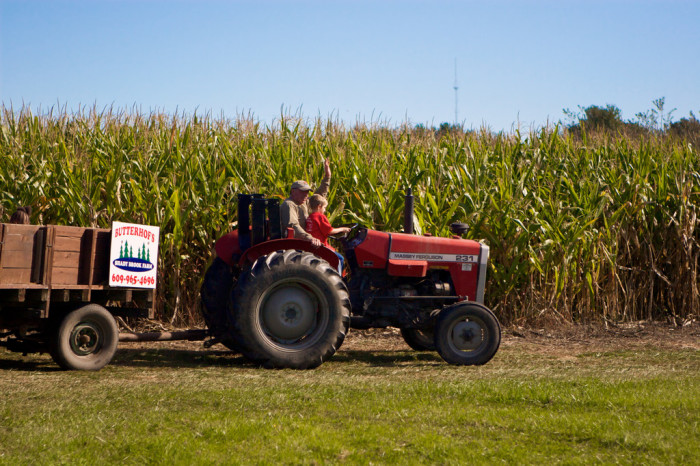 The Best New Jersey Corn Mazes