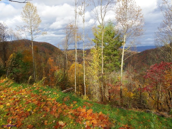 13) Carole Hart Johnson catches the stunning colors of a Tennessee autumn.