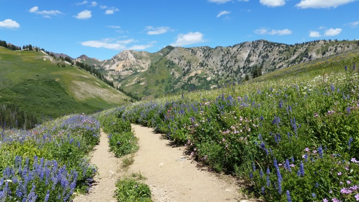 14. Cecilia Vermeer shared this shot of Albion Basin with us.
