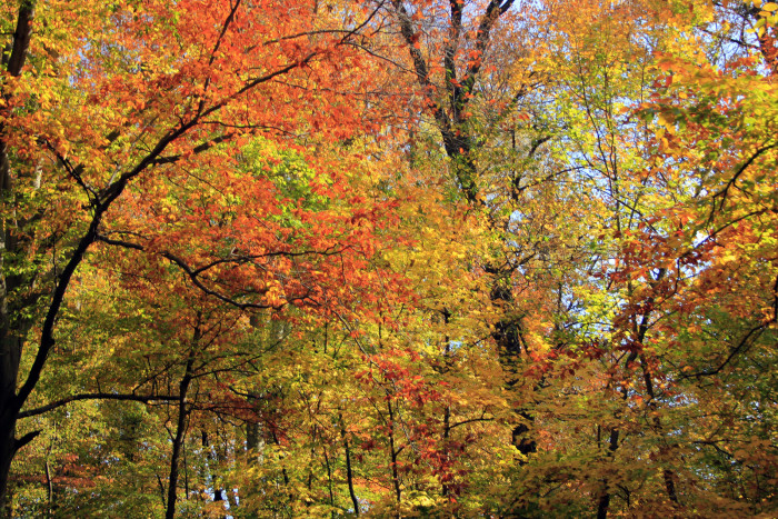 8. Cherokee Park