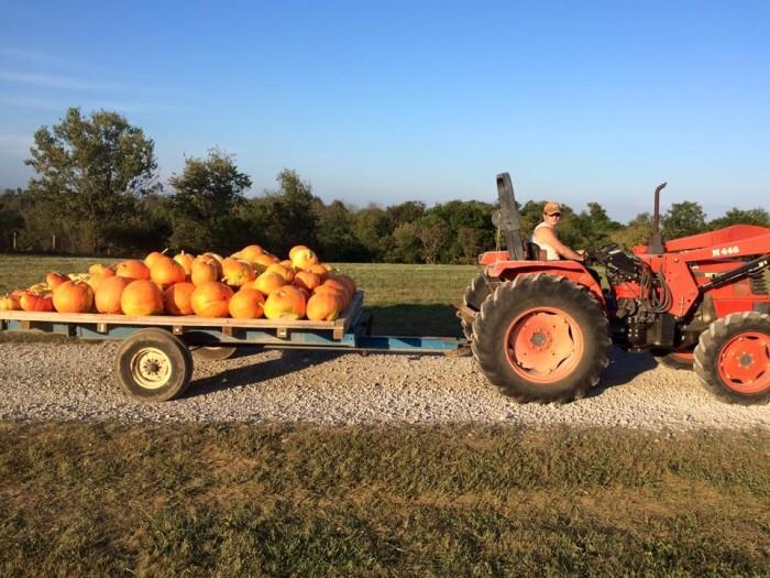 9. Country Pumpkins