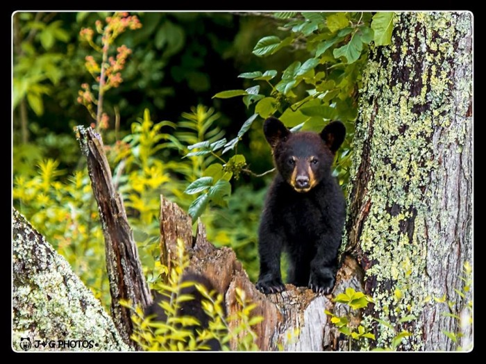 5) Um, HELLO cuteness! Jon Phillips is a BOSS when it comes to Tennessee wildlife shots!