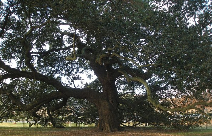 """12. The first reading of Abraham's Emancipation Proclamation in the South was held under what is now known as """"Emancipation Oak"""" outside of Fort Monroe on the present day site of Hampton University."""