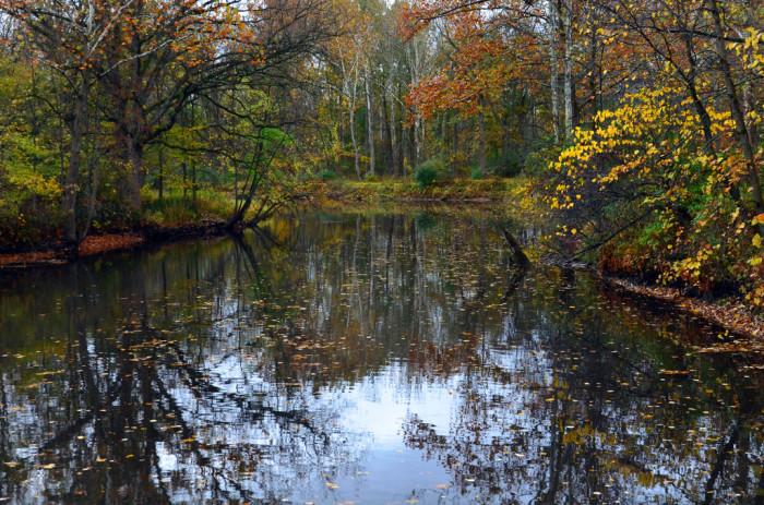 10) Flint River