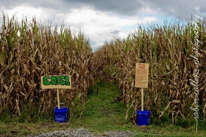 8. G and J Farms Corn Maze, Wise