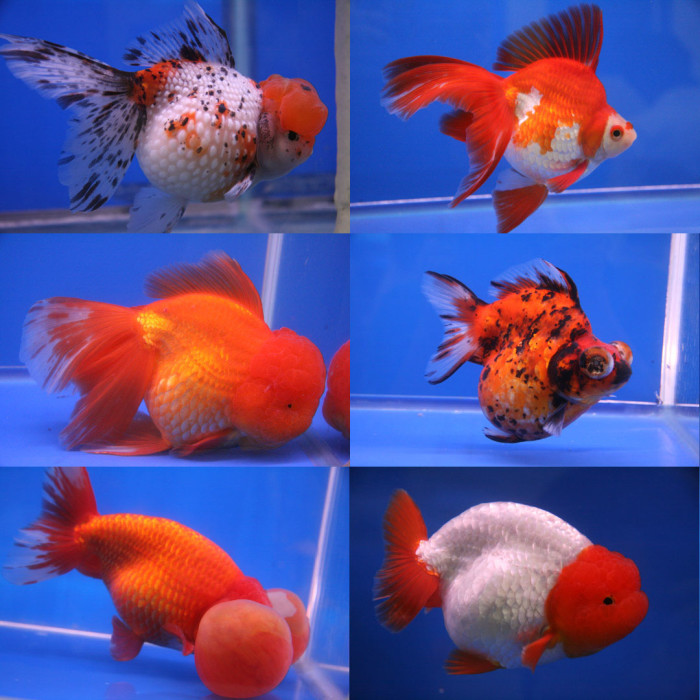6. Did you know the first successful goldfish farm was opened in Martinsville in 1899?