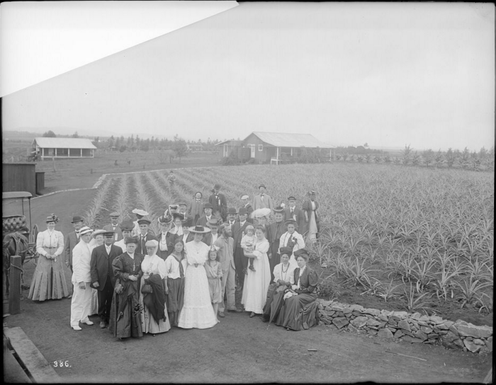 10) This photograph was taken in 1907, when the Los Angeles Chamber of Commerce made a visit to Hawaii, and posed next to this pineapple field.