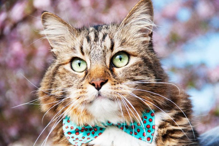 7. In  November 2012,  Hank the Cat from Springfield came in 3rd in the 2012 U.S. Senate race. What does that tell you about the state of our political affairs?
