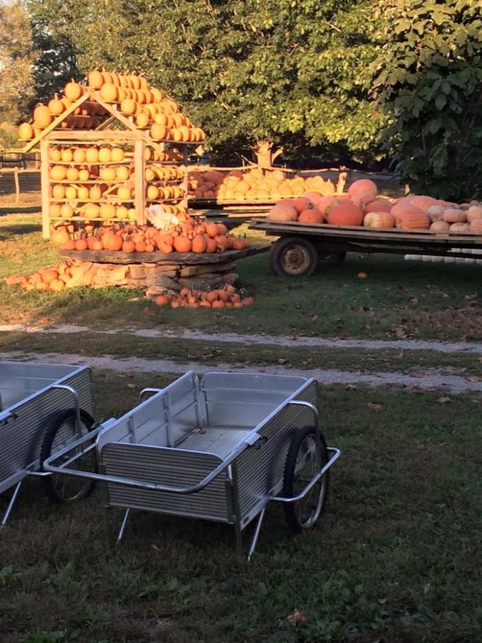 10. Happy Jack's Pumpkin Farm