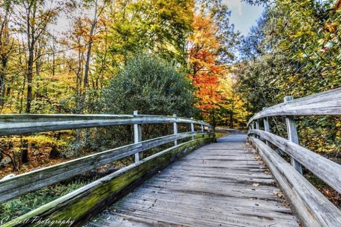 13. I'd like to cross this lovely bridge in Heddon Park, Randolph. Taken by Casey Scott.