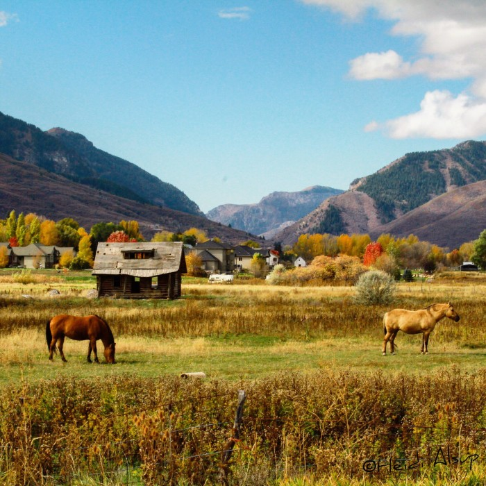 8. I love this pastoral fall photo of the Ogden Valley that Heidi Alsup submitted!