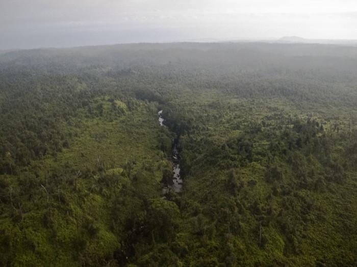 6) Hilo Forest Reserve, Big Island