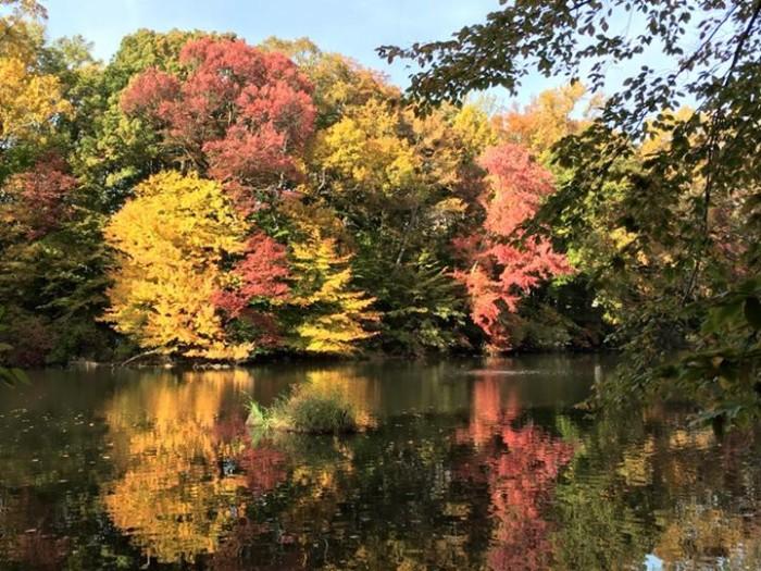 7. A fall day at Hopkins Pond, taken by Pamela Edler.