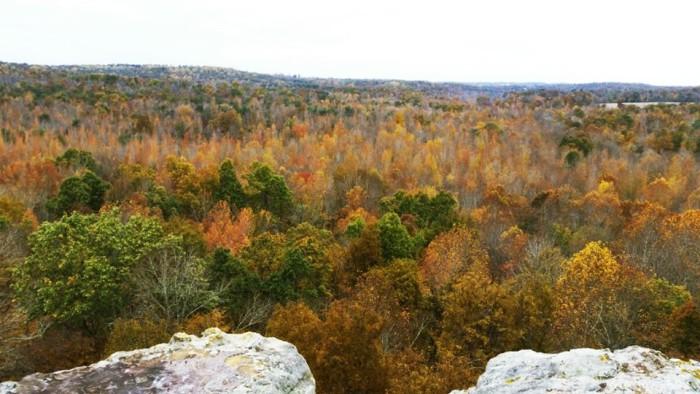 9. Hunter's Bluff in Hopkins County via Jill Bratcher.