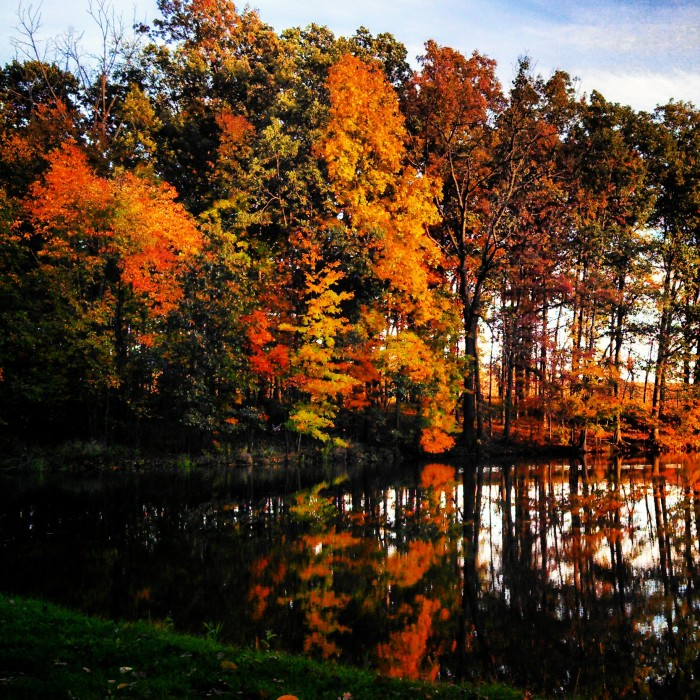 6. Fall foliage over backyard pond in Wooster, OH