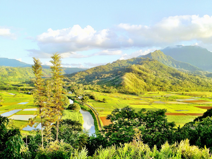 1) Kealia Forest Reserve, Kauai