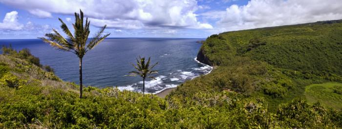 2) Kohala Forest Reserve, Big Island