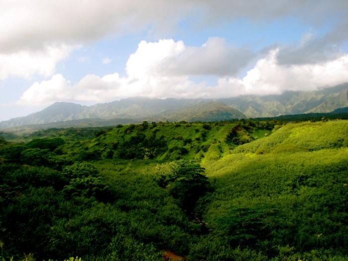 7) Lihue-Koloa Forest Reserve, Kauai