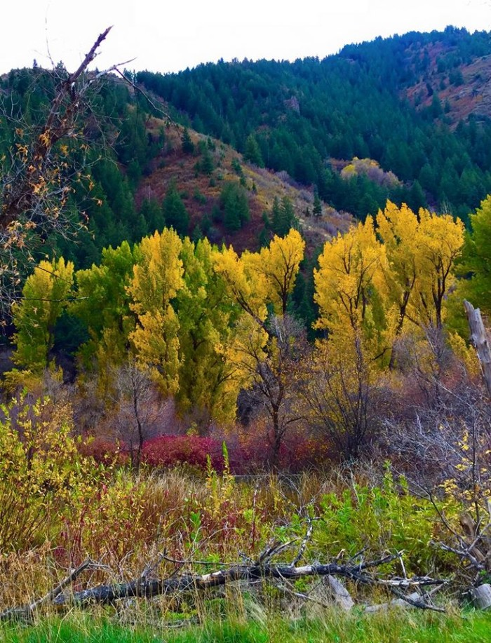 19. Lindy Reloux enjoyed these fall colors in Provo Canyon, and shared them with us!