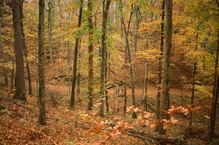 5. Mammoth Cave National Park