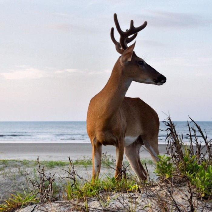 14.  Wow! What a stunning photograph of the wildlife on Kiawah Island. He's just so majestic and was captured perfectly by Marcus Johnson.