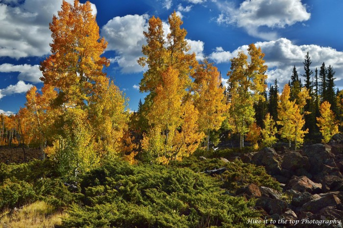 16. Mark Aldridge submitted this beautiful photo of the aspen at Duck Creek.
