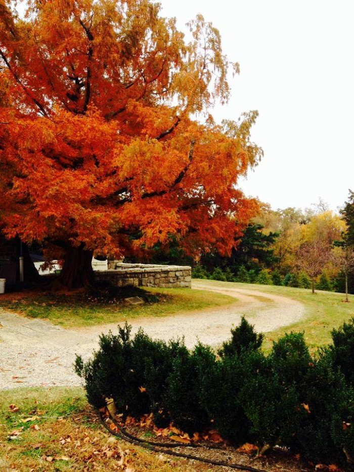 4. Maymont Park showcases the brilliant colors of a Virginia fall. Submitted by Lacey Cecilia Bennett.