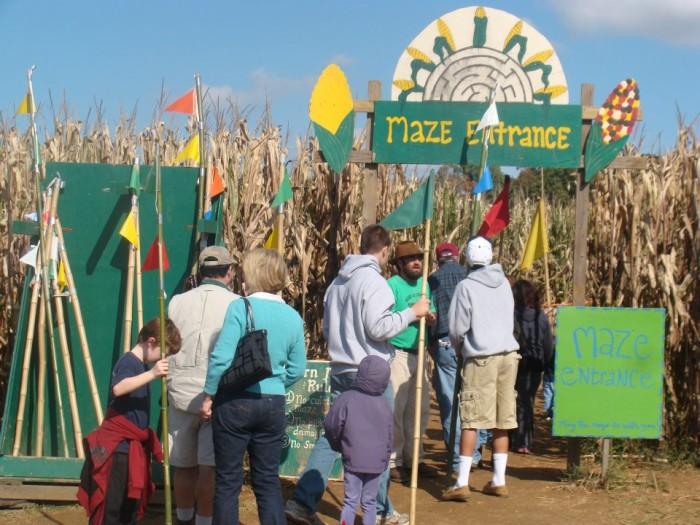4. Corn Maze in the Plains, The Plains
