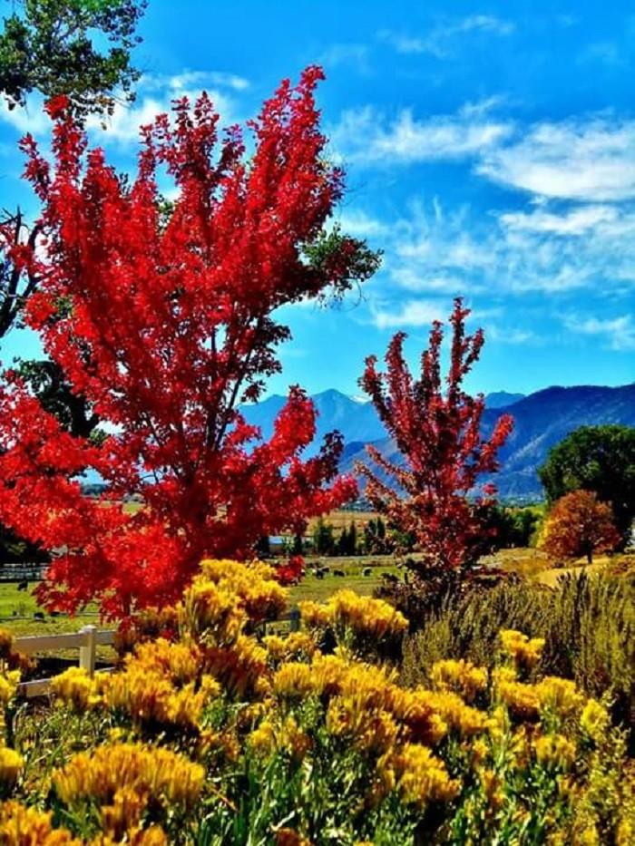 1. Beautiful fall colors north of Genoa, Nevada.
