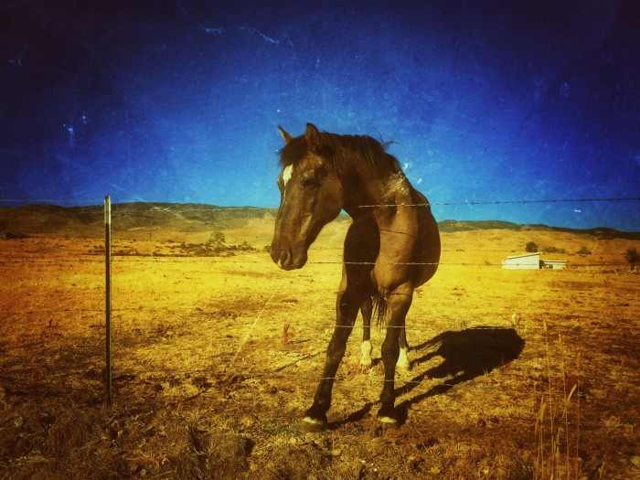 10. A beautiful horse in Foothill Acres, Reno, Nevada.