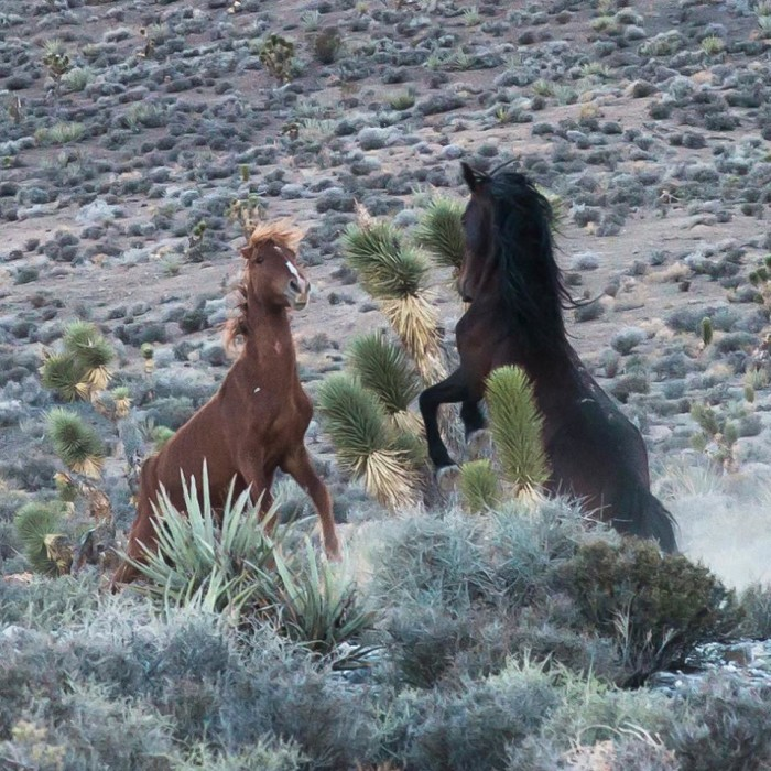 2. A fantastic capture of wild horses being rambunctious.