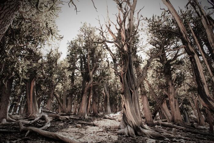 15. A fantastic capture of Raintree in Mount Charleston.