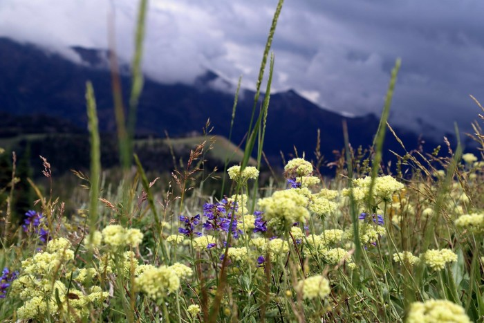 19. Lovely wildflowers in the Jarbidge Mountains.
